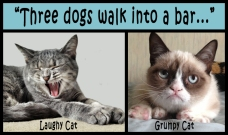 """Three dogs walk into a bar...""  Not funny for all cats... ;-)"