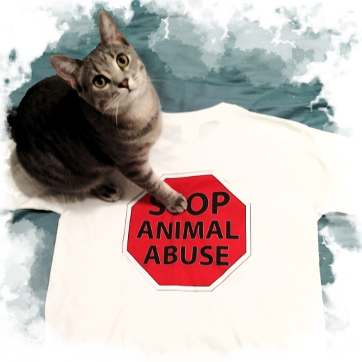 My cat Chloe works for a very important cause: Stop Animal Abuse © Cindy Giannoulatos-Malnasi