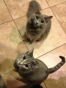Chloe and Scarlett always put on their cutest faces when I'm in the kitchen ;-)  © Cindy Giannoulatos-Malnasi